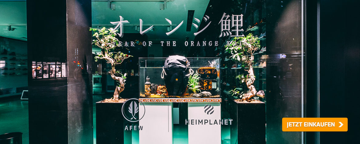Year Of The Orange Koi